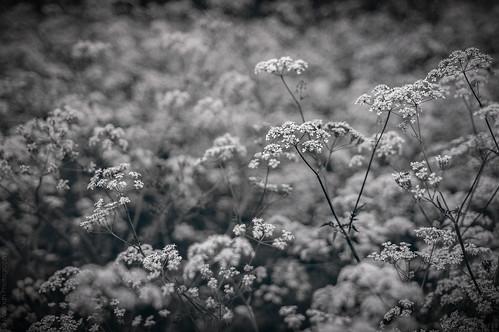 Wildflower // 16 05 14