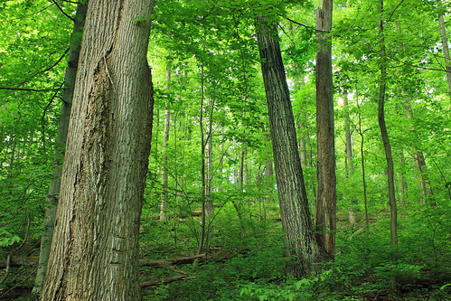 trees nature leaves forest spring lowlight hiking pennsylvania branches creativecommons vegetation trunks deciduous lancastercounty undergrowth understory lancastercountyconservancy temperatedeciduousforest textermountainnaturepreserve