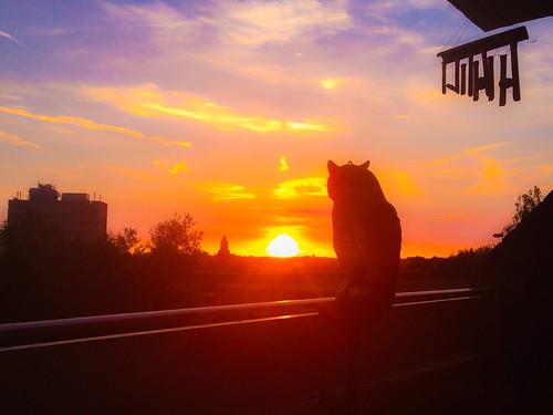 bird sunrise view owl windchime clearsky walsall balconyview slightcloud