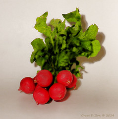 Painted Radishes