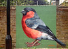 Bullfinch by ATM, Wood Green