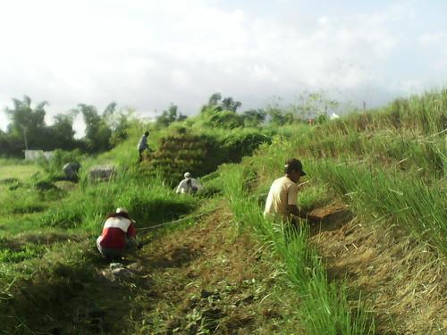 landscape landscaping slope stabilizedslope vetiverarea