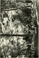 "Image from page 48 of ""Fenimore Cooper's grave and Christ churchyard"" (1911)"