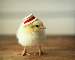 Top-10-Baby-Chicks-in-Hats-1