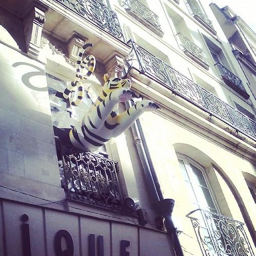 Le tigre a surpris Néné. #nantes