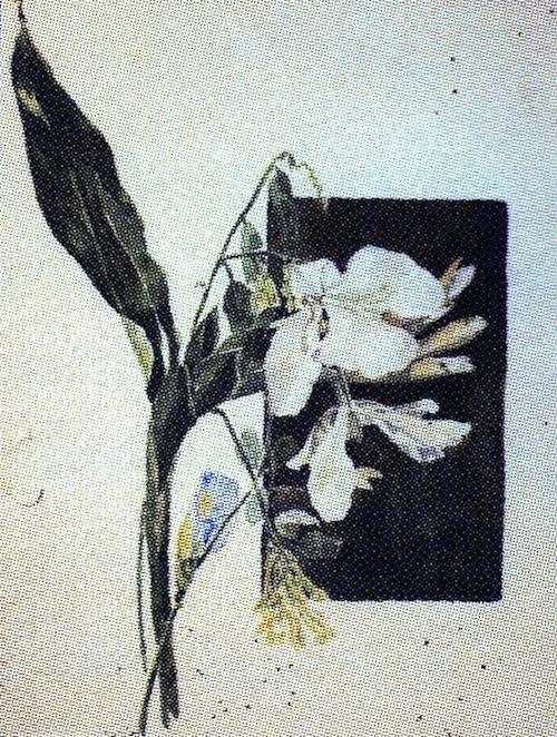ART205Q
