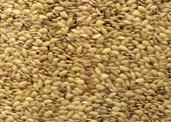 sunflower seed(0.0), barley(0.0), wheat(0.0), plant(0.0), crop(0.0), agriculture(1.0), vegetable(1.0), vegetarian food(1.0), whole grain(1.0), produce(1.0), food(1.0),