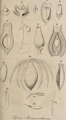 """Image from page 220 of """"Verhandelingen van het Bataviaasch Genootschap der Kunsten en Wetenschappen"""" (1779)"""