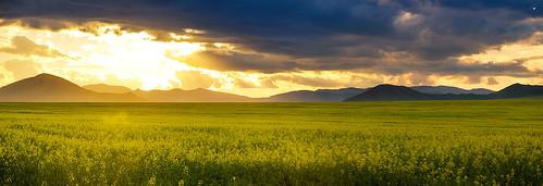 flowers sunset yellow sundown province mongolian tamir bulgan монгол аймаг баярсайхан bayarsaikhan tusgal булган tamirglz тамир тусгал