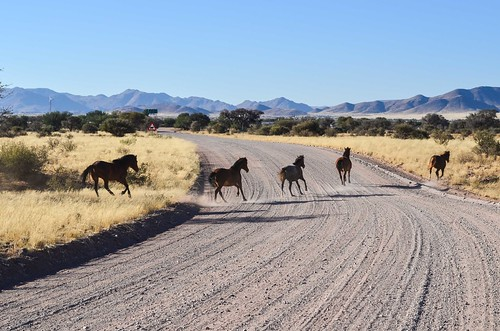 Horses near Betta, Namibia