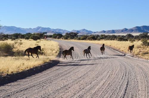 Horses near Betta, Namibia