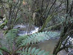 2014-08-10 Lilydale Falls 062 - Second River