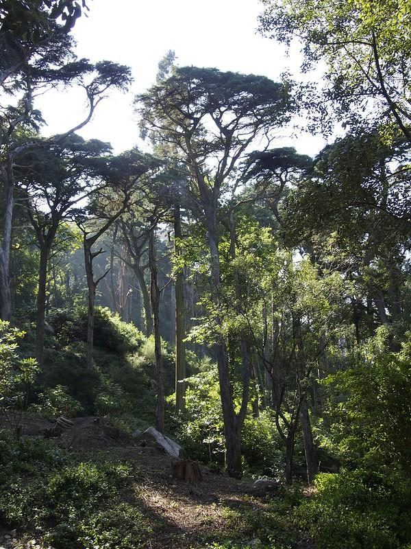 Pena Palace Garden, Portugal, castle, fairytale, hills, Sintra, travel, Seven Wonders, Unesco World Heritage Site