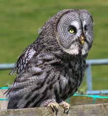 White House Farm Owls