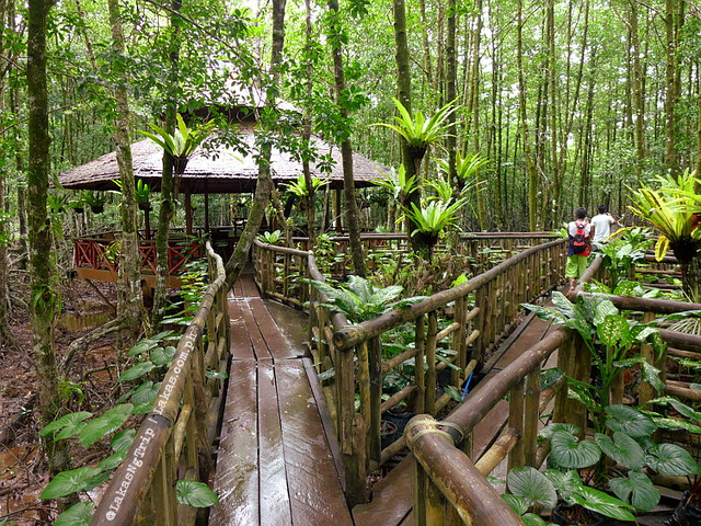 Cottages. Mangrove Eco Park, El Nido, Palawan