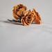 Roses_02 by isa_jga