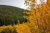 Autumn near Horseshoe Creek