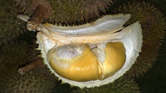 pleurotus eryngii(0.0), medicinal mushroom(0.0), plant(0.0), oyster mushroom(0.0), produce(1.0), fruit(1.0), food(1.0), durian(1.0), jackfruit(1.0),