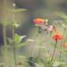 Sonnet by Pretty Petal Studio