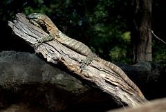 I love my log