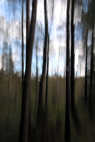 trees abstract art nature rural forest sweden scandinavia icm intentionalcameramovement