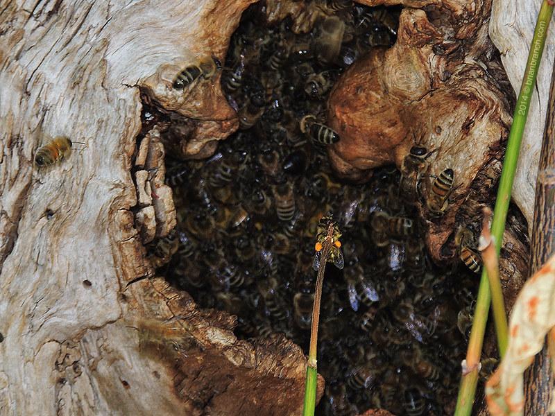 DSCN9105_bees
