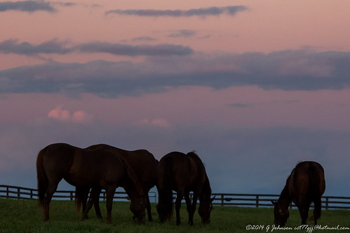 sunset newyork galway clouds evening dusk grazing beltofvenus saratogacounty thoroughbredhorse