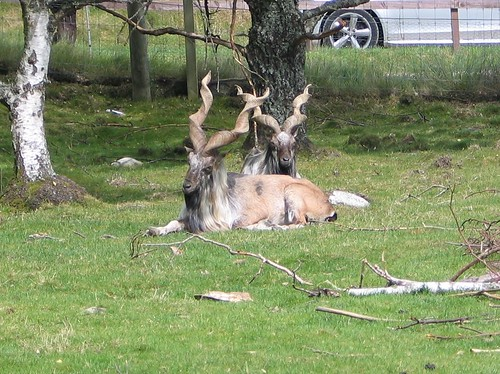 Highland Wildlife Park 2014 (8)