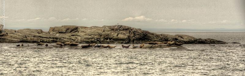 Phoques au Bic / Bic Seals