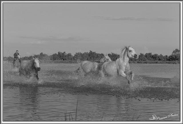 Galop dans le Marais (37)
