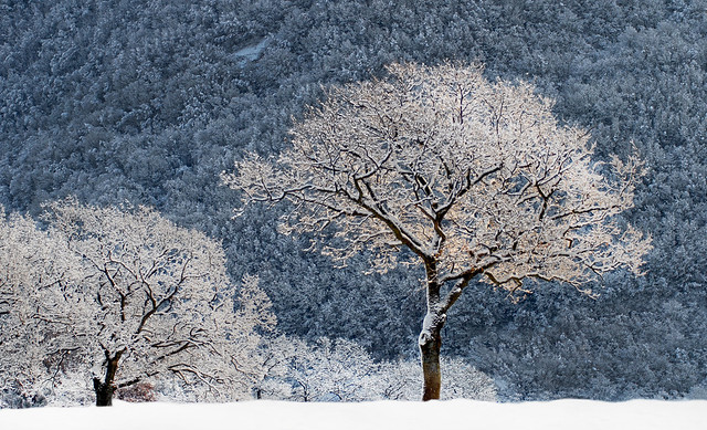 Alberi sotto la neve, Nikon D200, Sigma 70-200mm F2.8 EX APO IF HSM