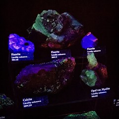 Various #fluorescent minerals glowing under ultra violet light at the museum of science.