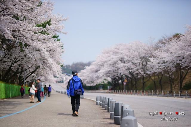 Walk under Sakura