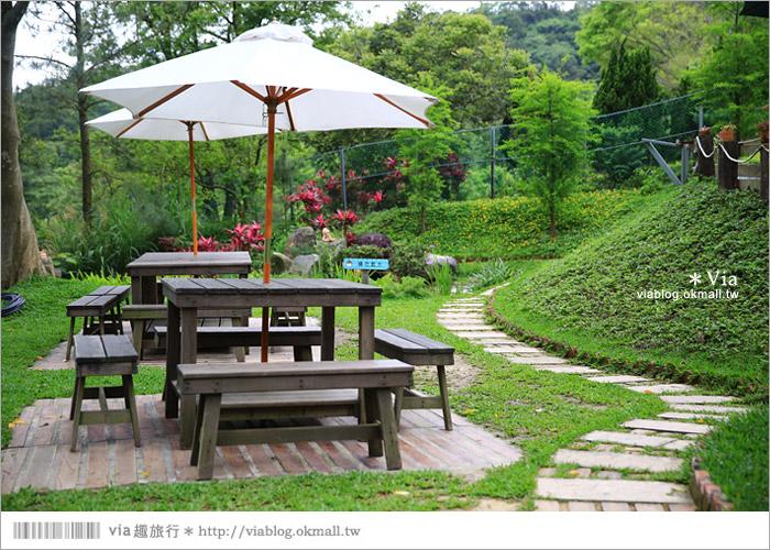 【新竹景點推薦】森林鳥花園~親子旅遊的好去處!在森林裡鳥兒與孩子們的樂園56