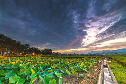 sunrise nikon lotus taiwan 台南 f28 荷花 日出 d600 雲彩 白河 14mm 火燒雲 samyang 竹子門
