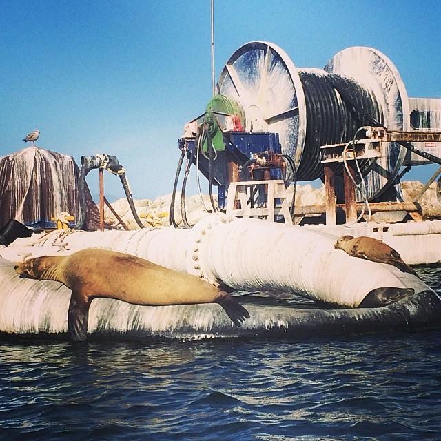 Mama seal and baby seal take a nap. #santabarbara #california #seals #wheresmilo #fromthekayak