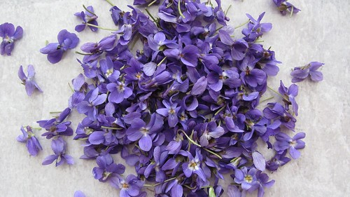 Violets / Veilchen