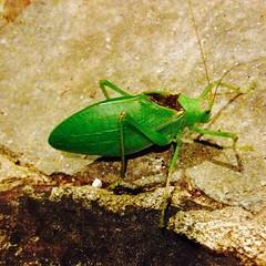 #3am #bug visitor/#dogwalker