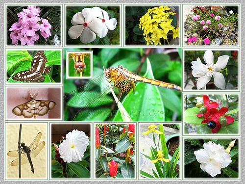 Tropical flora and fauna in our garden, captured from May to July 2014