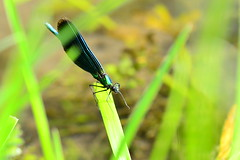 Dragonfly - Photo of Doulevant-le-Petit