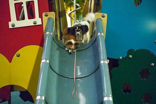Playground Dogs