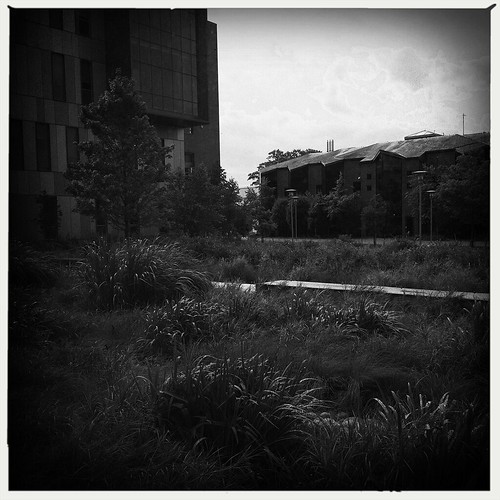 cameraphone trees windows white black nature grass architecture landscape blackwhite shapes raindrops delaware 365 newark phonephoto urbanlandscape iphone universityofdelaware wonderlens iphoneography hipstamatic aobwfilm windowwednesdays iphone5s oggl
