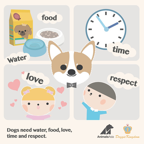 Dog need water, food, love, time and respect