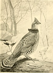 """Image from page 134 of """"Bird-life; a guide to the study of our common birds"""" (1897)"""