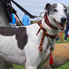 140413 Dog Show-0153
