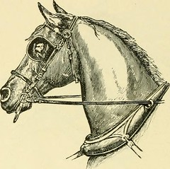 """Image from page 251 of """"The standard horse book, comprising the taming, controlling and education of unbroken and vicious horses"""" (1895)"""