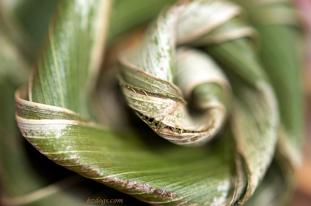 Palm Frond Flower