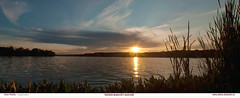 COOTES SUNSET 24x60 P1t