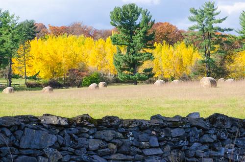 nature landscape virginia ginkgo blandyexperimentalfarm virginiastatearboretum
