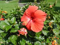 2014-08-26 Toronto Botanical Gardens 028